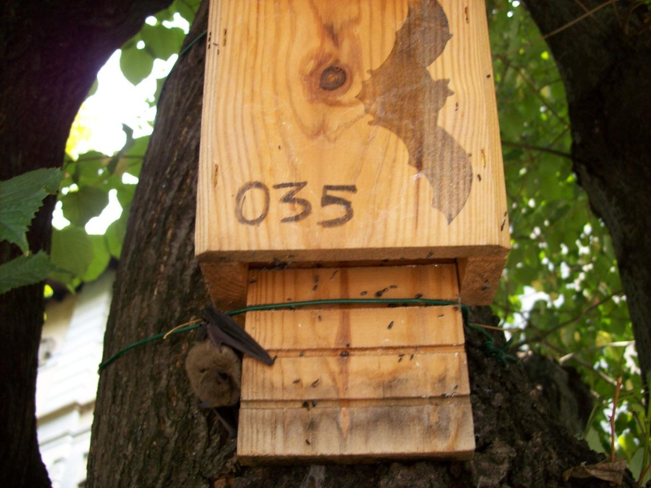 box pipistrelli 1